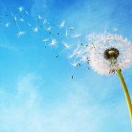 Soffio di vento leggero